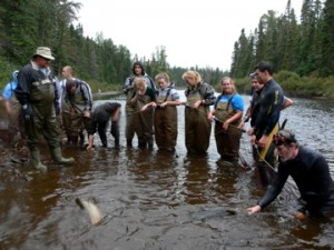 Students from the local college volunteer to help collect salmon for spawning