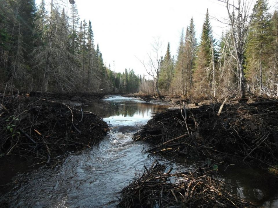 Mill Stream Beaver Dam - After
