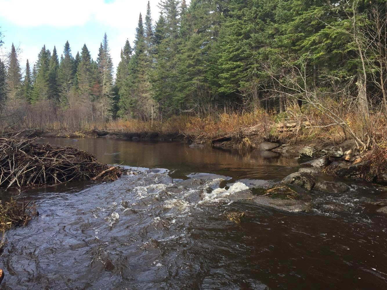 Big Hole brook after beaver dam removal 2017