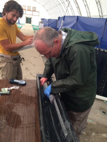 MSa President Mark Hambrook measuring SAS fish in 2017