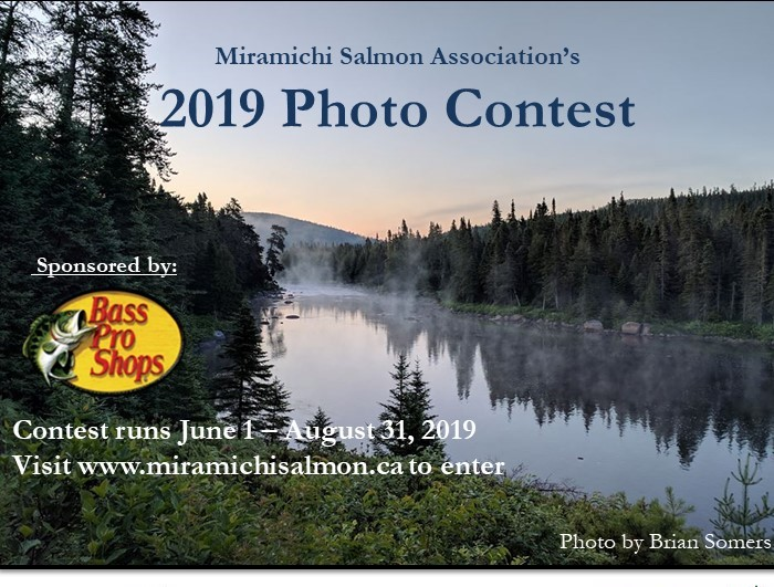 Photo Contest 2019 (2)