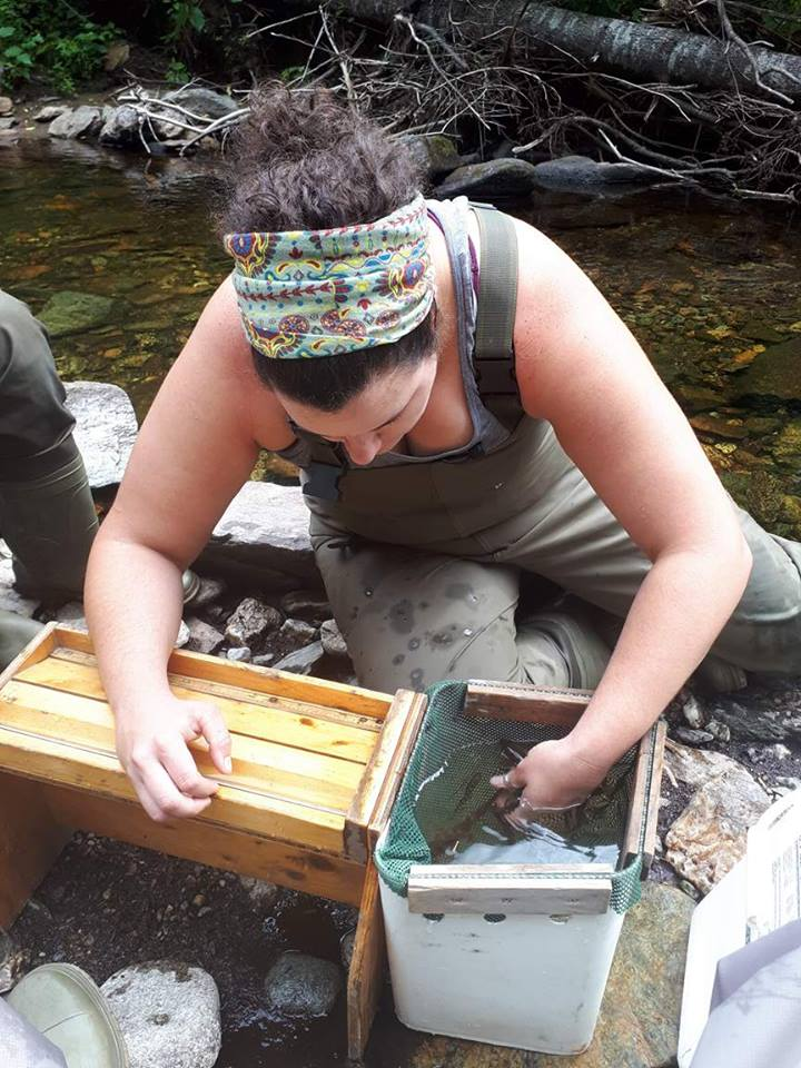 MSA Biologist Kelsey Mcgee collecting electrofishing data in 2017