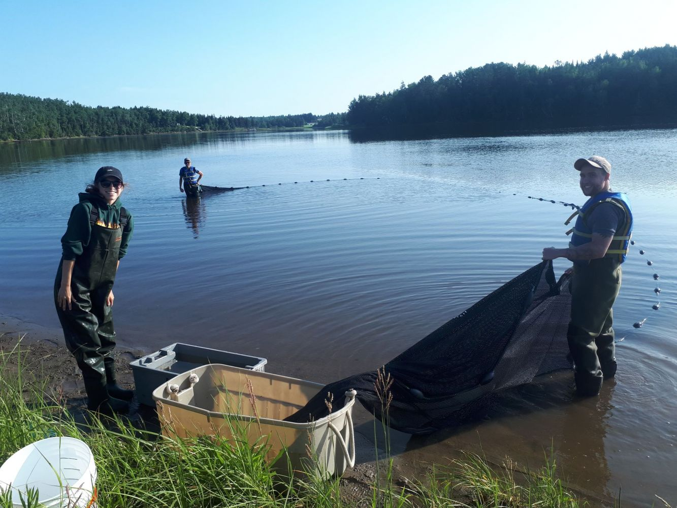 Seining for striped bass juveniles
