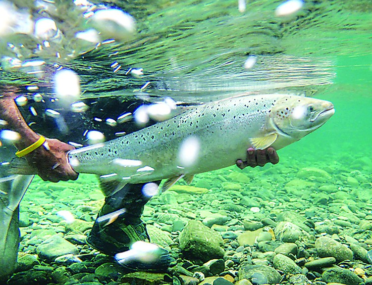 Leade Fish