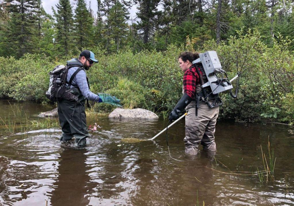 MSA Biologist Kelsey McGee Electrofishing